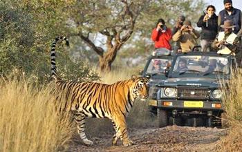 golden-triangle-tour-with-tiger-safari