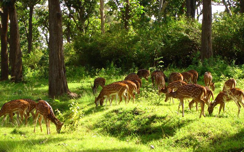 deer park in almora india
