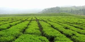 ketti valley in Ooty - tamil nadu