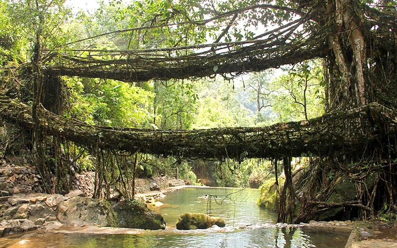 living root bridges in cherrapunji india