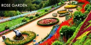 rose garden - ketti valley