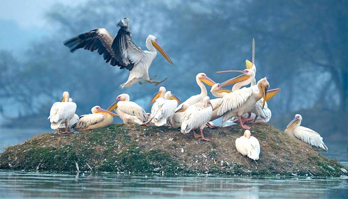 Vembanad-Lake-Kumarakom