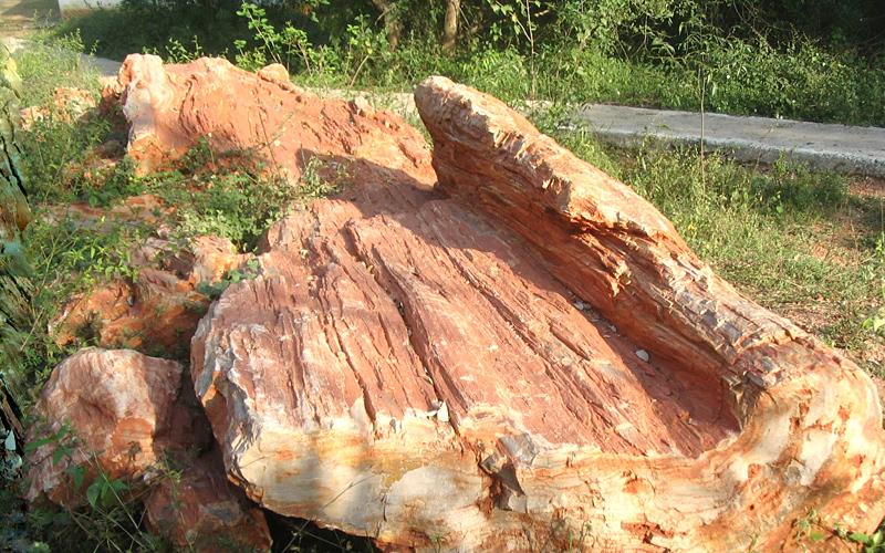 akal-wood-fossil-park-india