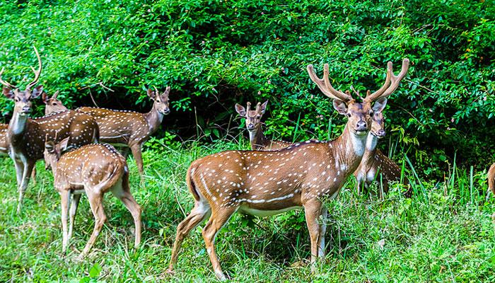 deer-park-ooty