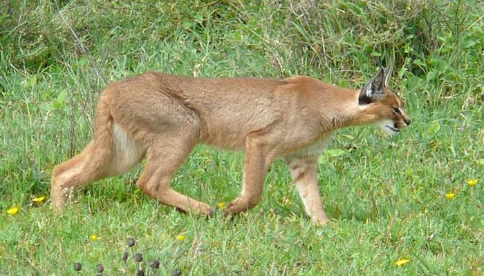 jojawar-wildlife-sanctury-rajasthan