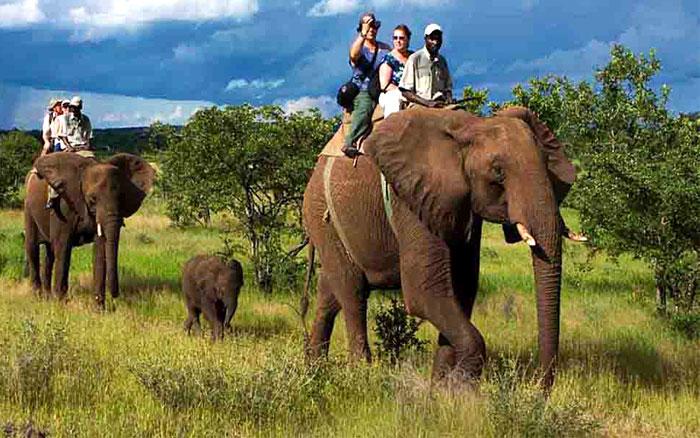 bijrani-safari-zone-jim-carbett-national-park