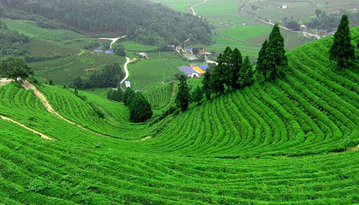 coonoor-hill-station-tamilnadu