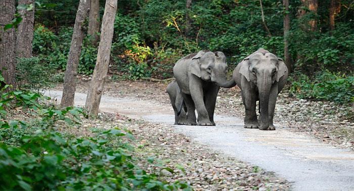 dhela-safari-zone-jim-carbett