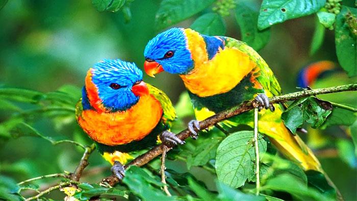jim-carbett-national-park-birds