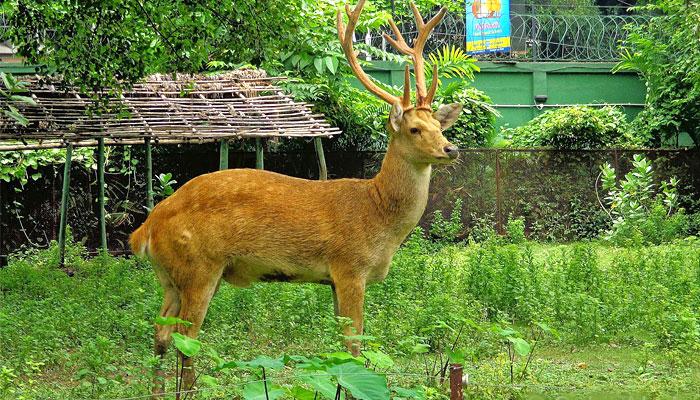 kalatop-wildlife-sanctuary-khajjiar