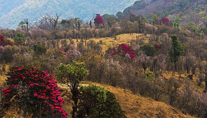 singalila-national-park-darjeeling