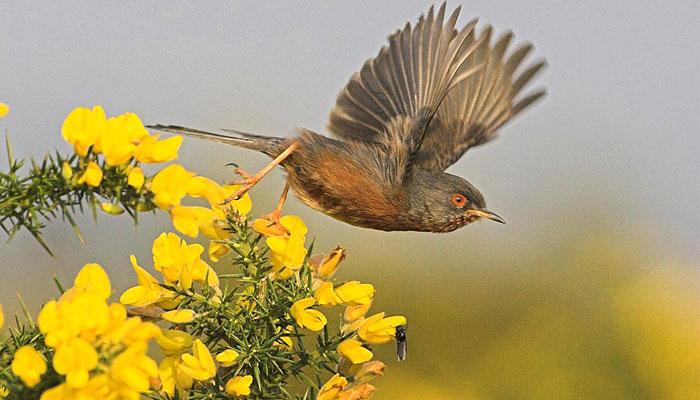 birds-watching-punjabiyat