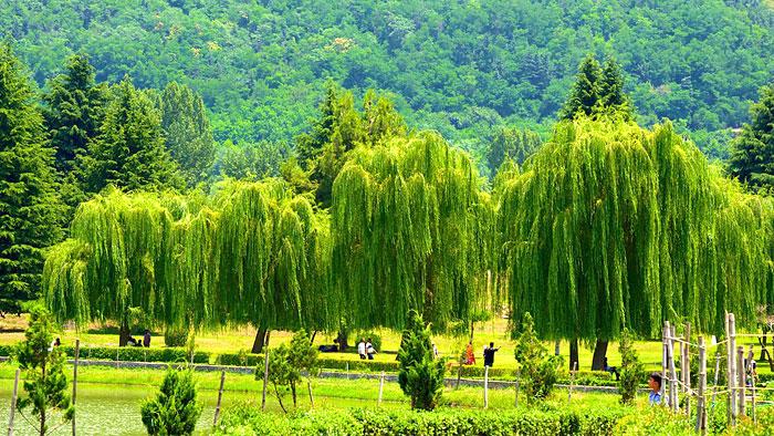 botanical-garden-srinagar