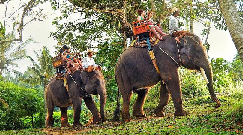 elephants-gavi-kerala