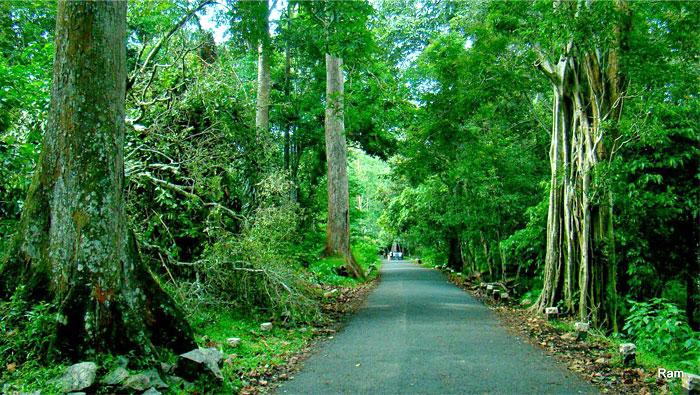 marayoor-sandalwood-forests-munnar