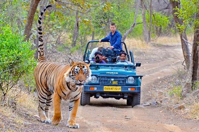 ranthambore-national-park-safari-rajasthan