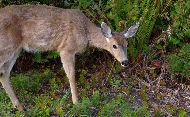 sajjangarh-wildlife-sactury