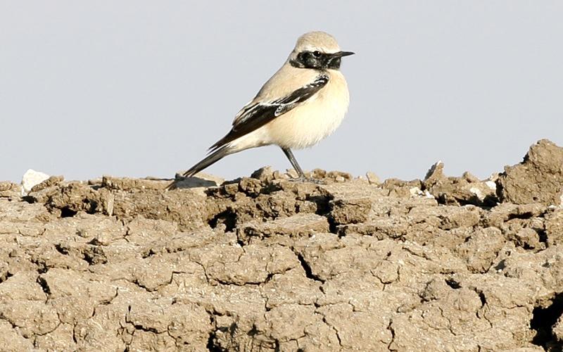 wildlife-sanctuary-in-bhuj-india