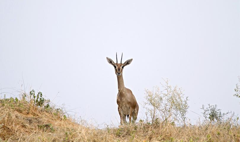 alsisar-mahal-safari