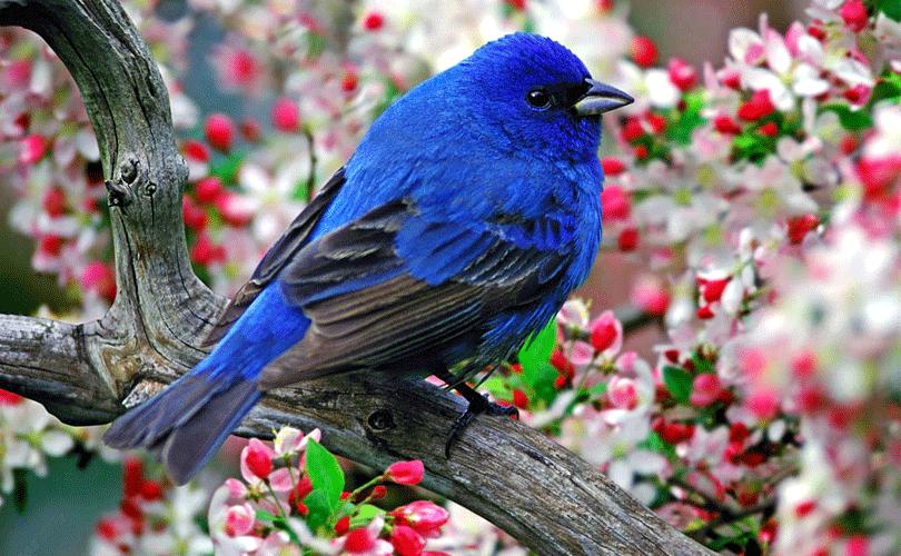bird-watching-at-kerala