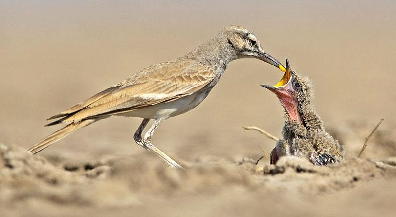 birds-watching-rann-riders-resort-dasada