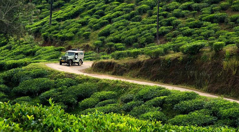 cardamom-country-jeep-safari