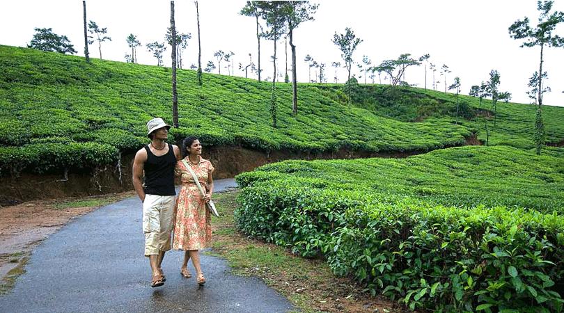 coffee-plantation-walk-thippanahalli-home-stay