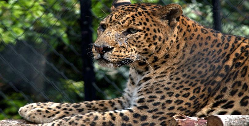 nainital-zoo