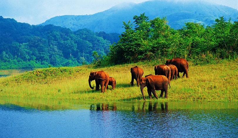 periyar-wildlife-reserve-kerala
