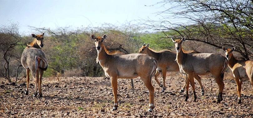 wildlife-bird-watching-at-sayla-gujarat