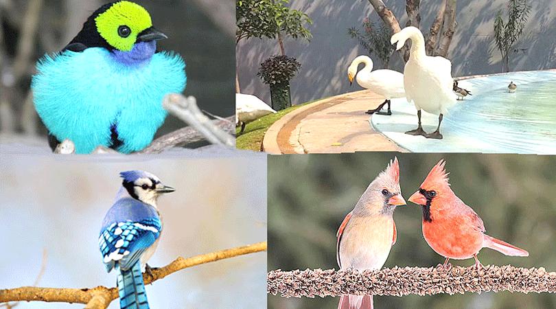 birds-park-hyderabad-india