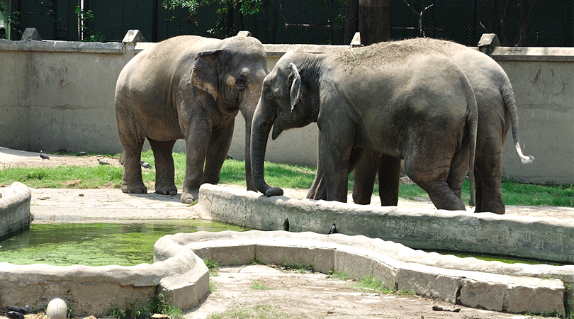 lucknow-zoo