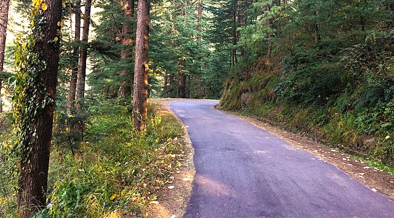 sunnymead-estate-oak-tree-shimla