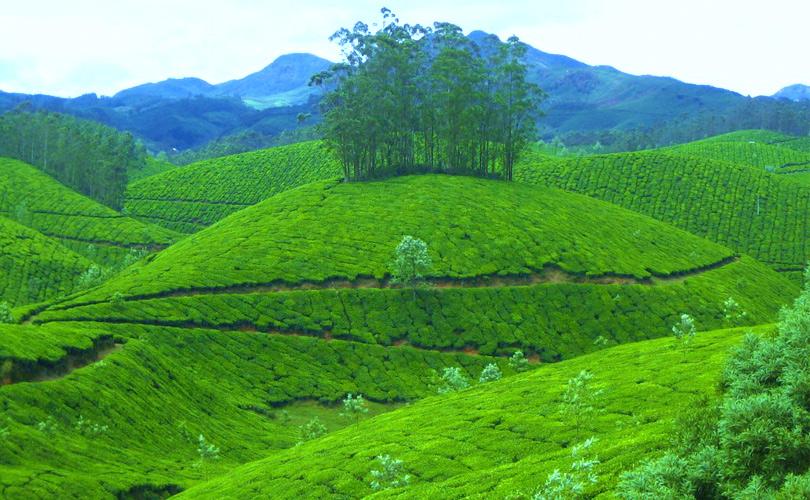 beauty-of-the-lush-green-hills-kerala