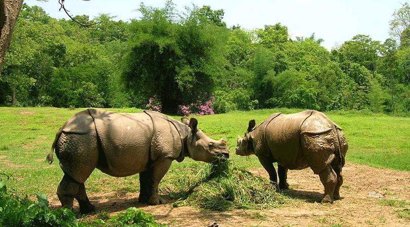 kaziranga-national-park-guwahati-assam