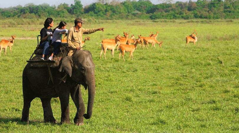 manas-national-park-guwahati-assam