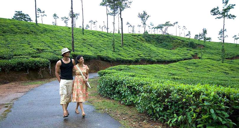 plantation-walk-coorg