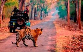 Tiger Reserve-Tadoba