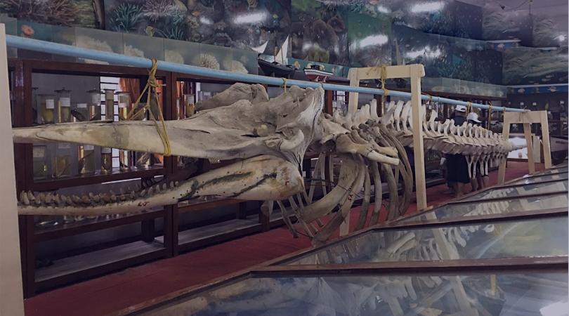 agatti-island-museum-india