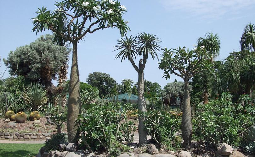 cactus-garden-india