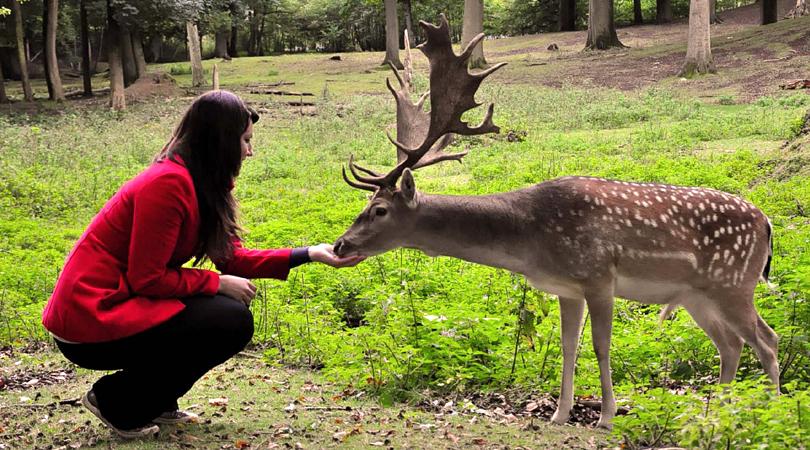 deer-park-india