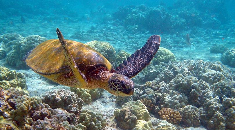 mahatma-gandhi-marine-national-park-india