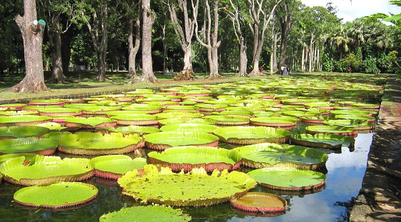 ramgoolam-botanical-gardens-india