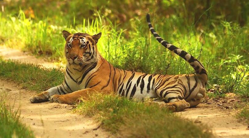 sri-venkateswara-national-park-india