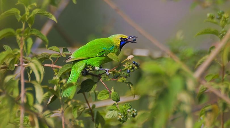 aralam-wildlife-sanctuary-india