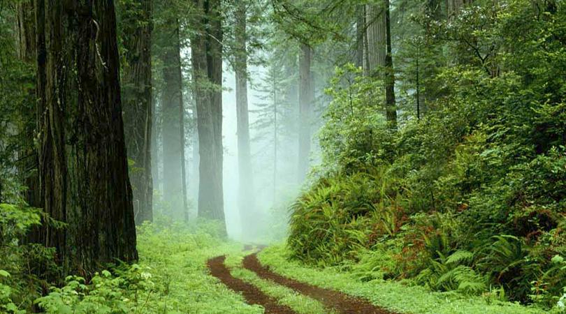 banasura-sagar-greens-india