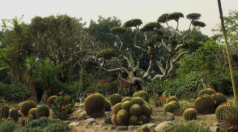 cactus-gardens-india