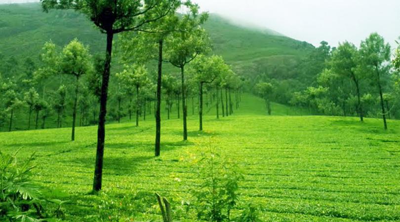 devikulam-tea-estate-india