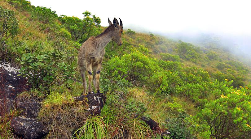 idukki-national-park-india
