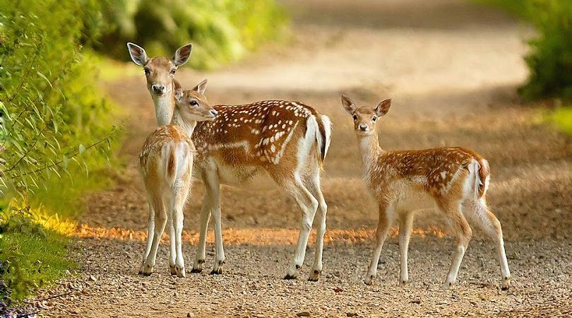 wildlife-in-sanchi-india